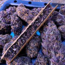 buy weed seeds